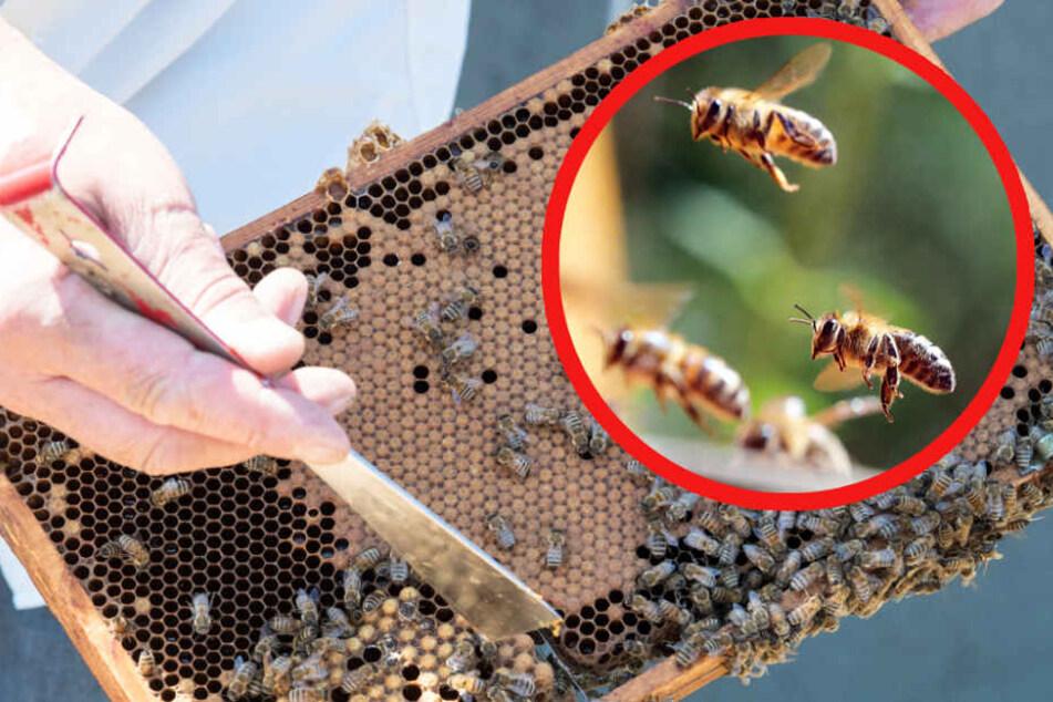 Imker stirbt nach unzähligen Bienenstichen: Seine Frau musste zusehen