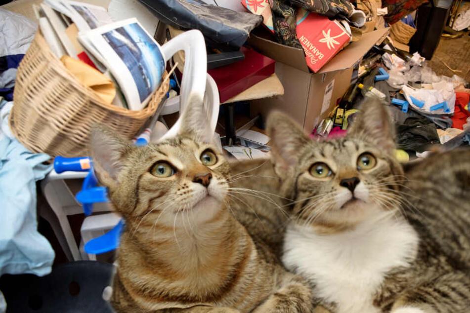 Ekelhaft! Zwei Frauen halten 100 Katzen zwischen Müll und Kot