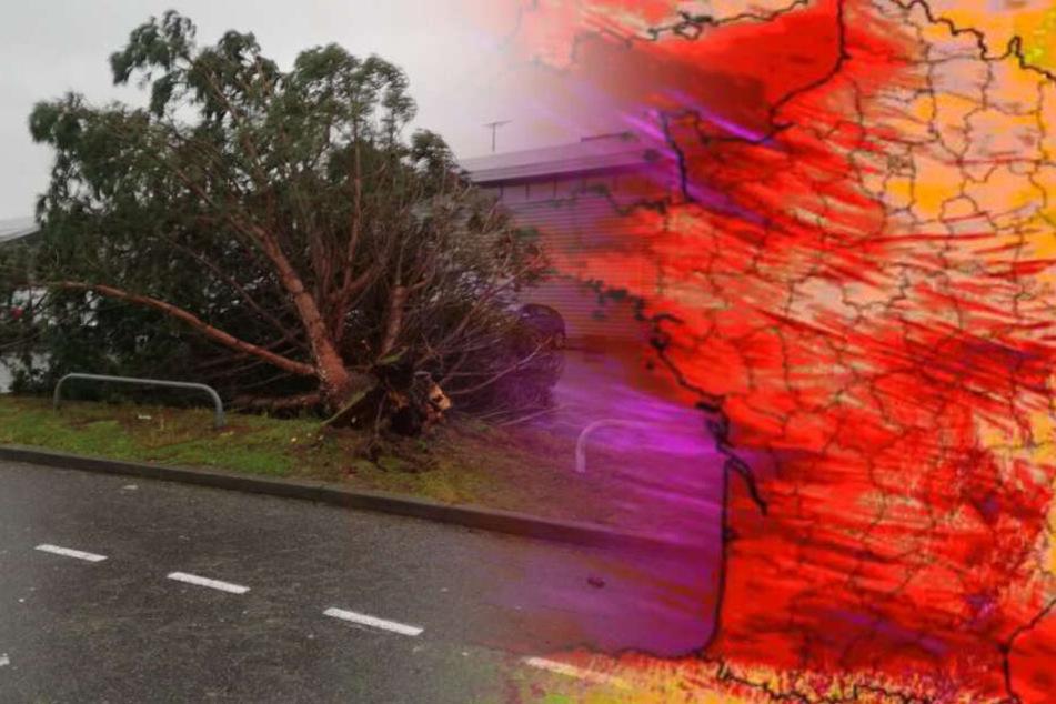142 km/h! Heftige Sturmböen sorgen für Chaos: Hunderttausende ohne Strom