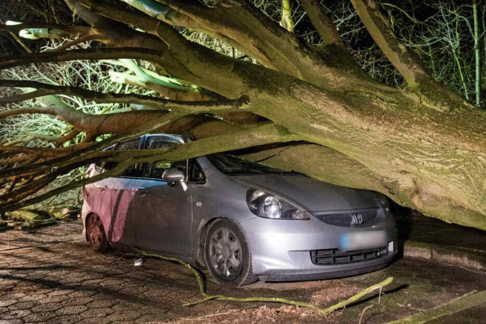 Ein umgestürzter Baum hat ein Auto unter sich begraben.
