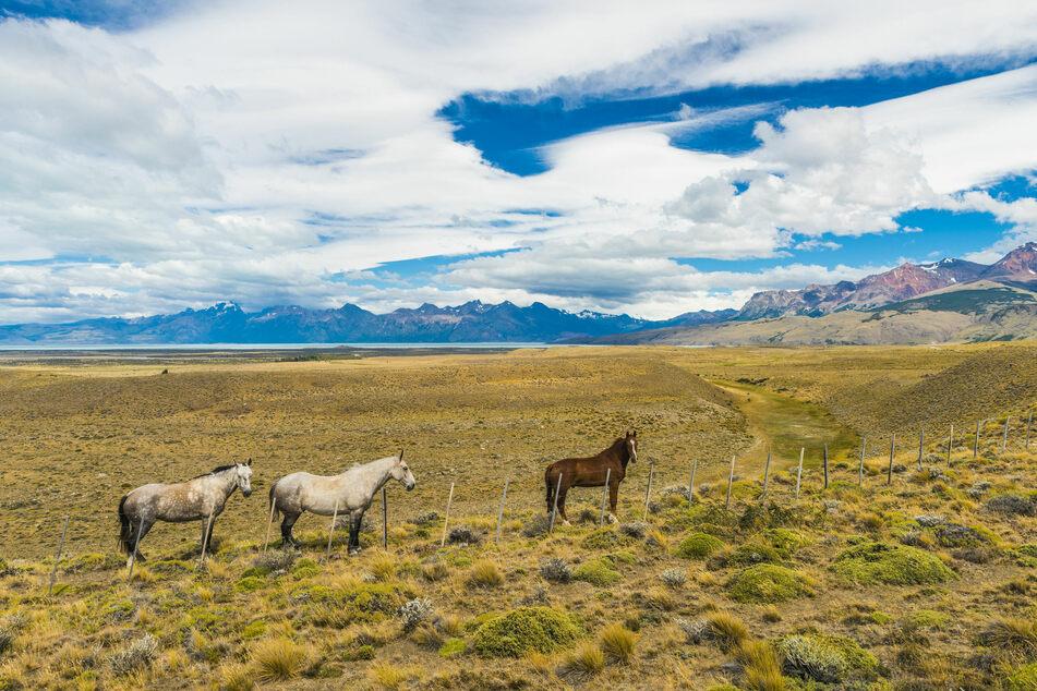 Wilde Pferde sind in den USA keine Seltenheit. (Symbolbild)