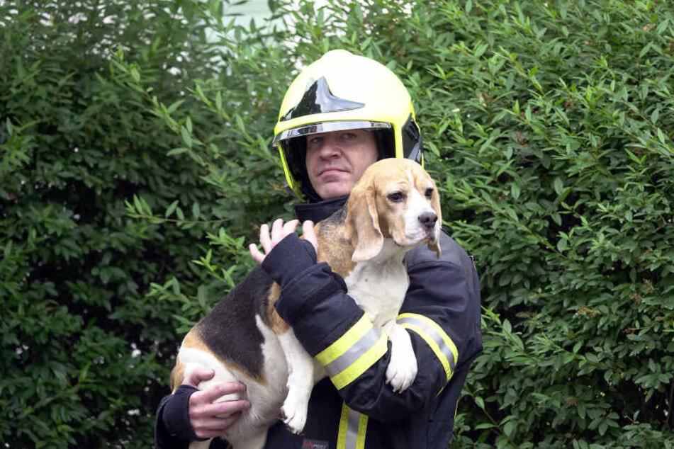 Feuerwehrchef René Kraus mit gerettetem Hund.