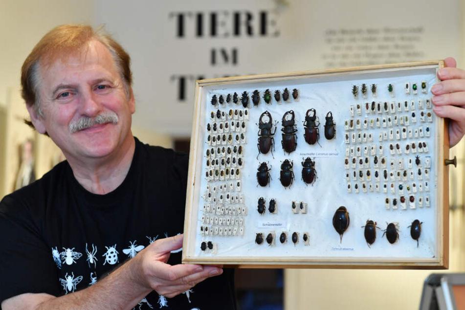 Ronald Bellstedt präsentiert am 21.09.2017 im Museum der Natur auf Schloss Friedenstein in Gotha (Thüringen) einen Insektenkasten mit Käfern.