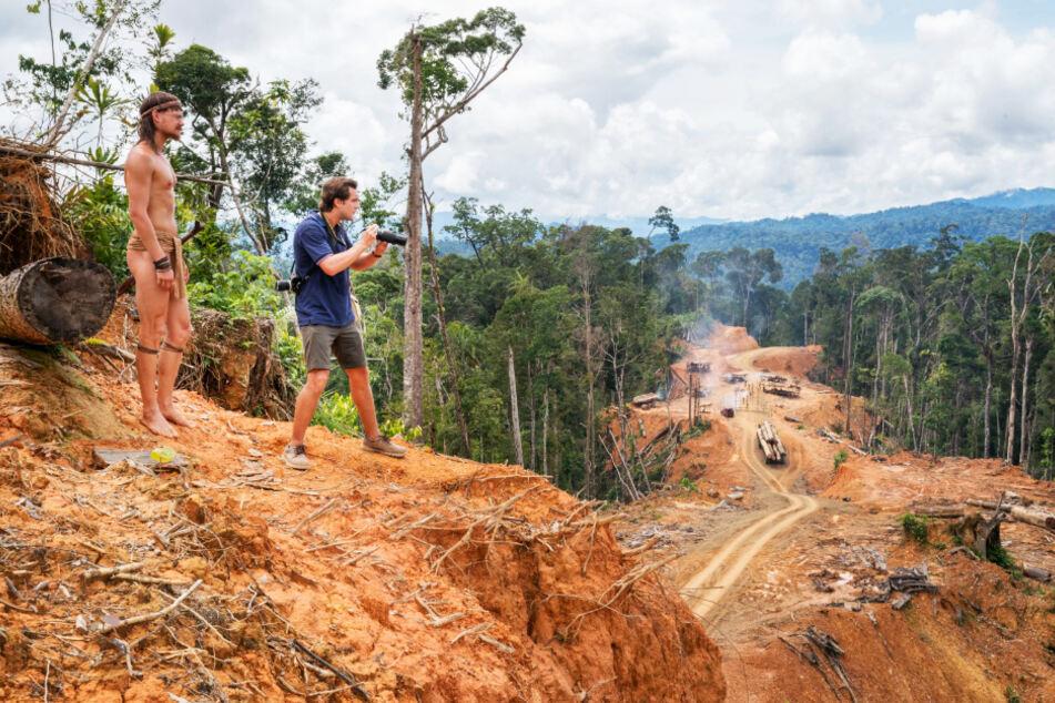 Rasend schnell wird der Regenwald aus Profitgier dem Erdboden gleichgemacht. Zurück bleibt eine tote Landschaft.
