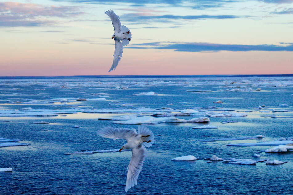 Über der Arktis wurde starker Ozonabbau in der Atmosphäre festgestellt. (Archivbild)