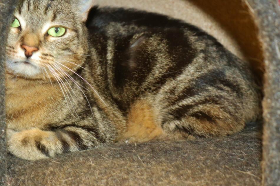 Katze Milla.
