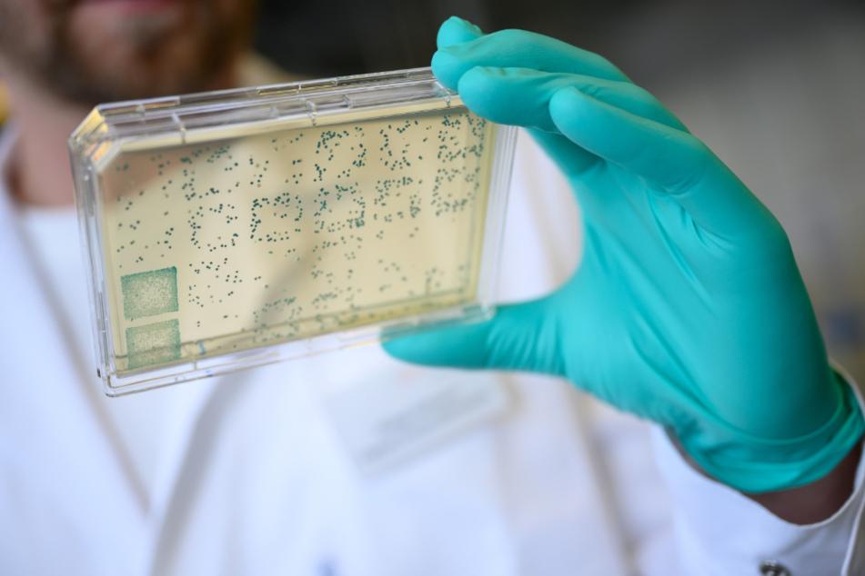 Pharmaunternehmen forscht CureVac an einem Impfstoff gegen das Coronavirus.