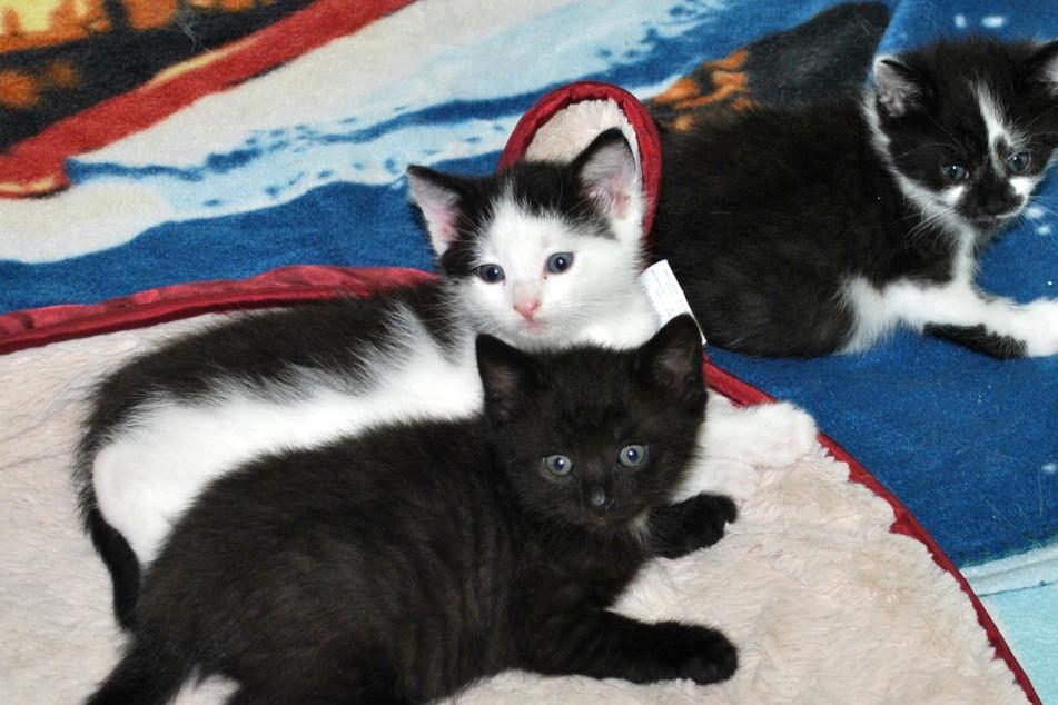 Diese süßen Kätzchen suchen passende Namen: So könnt Ihr mitmachen!