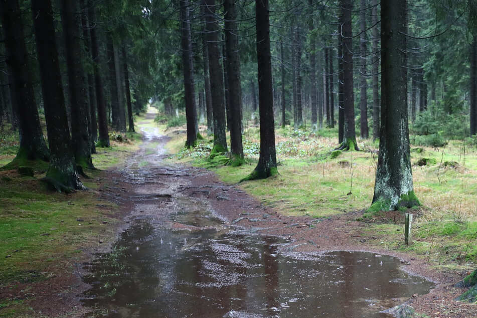 13-Jährige von Männern in Waldstück gezerrt! Wer hat etwas beobachtet?