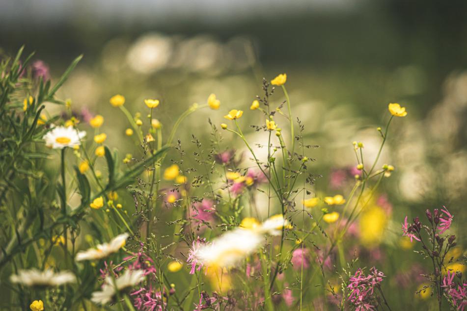 Naturbelassene Flecken im Garten sind eine Oase für Insekten und Igel.