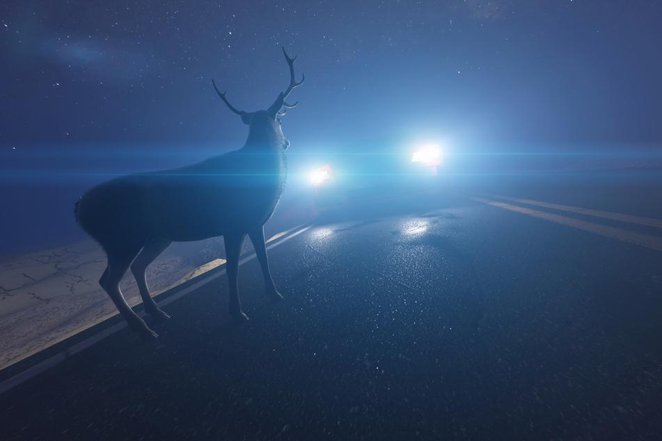 Die Polizei Neuss erklärt, wie man sich im Falle eines Wildwechsels richtig verhält. (Symbolbild)