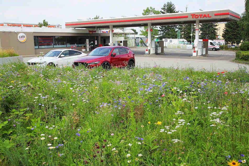 """An der """"Total""""-Tankstelle auf der Kesselsdorfer Straße wurde die junge Frau überfallen."""