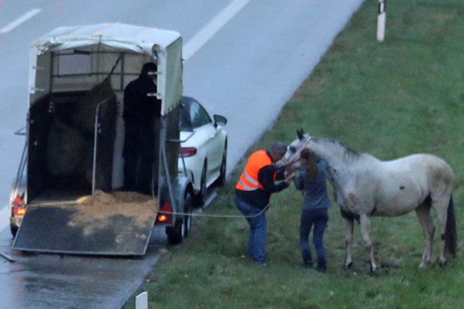Pferd springt während der Fahrt aus seinem Anhänger