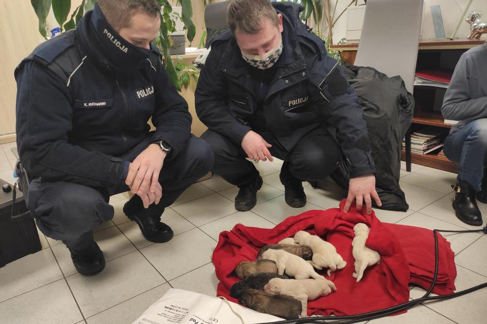 Nach einem Zeugenhinweis fand die Polizei diese süßen Welpen, die jemand in der Kälte sterben lassen wollte.