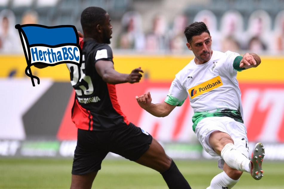 Gladbach in der Champions League: Hertha mit Niederlage zum Abschluss