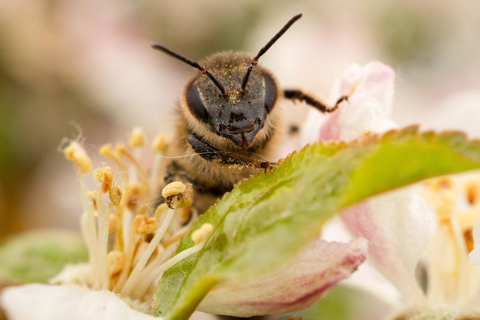 Bisher hat Wirt 33 Bienenvölker im Saarland sowie in Rheinland-Pfalz bei Kunden aufgestellt (Symbolfoto).