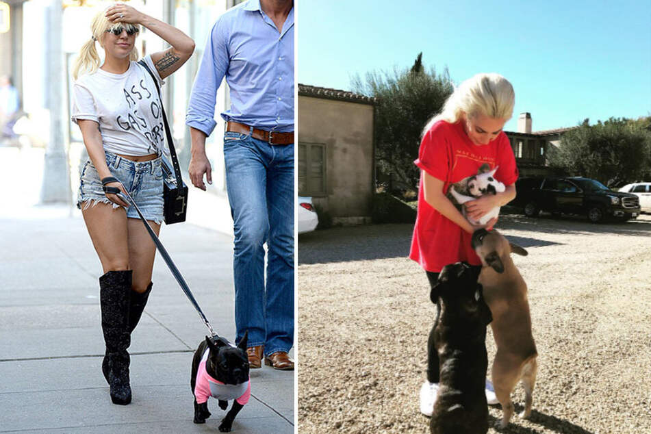 Horrific video shows Lady Gaga's dog walker being shot as gunmen steal her pets