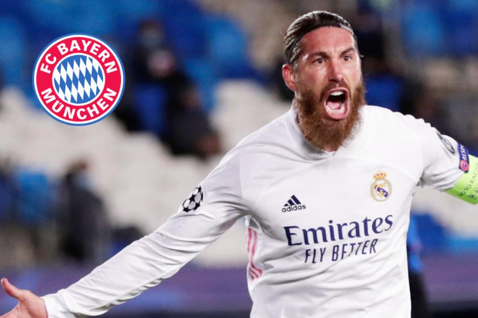 Real-Star zum FC Bayern: Lotsen die FCB-Bosse Sergio Ramos an die Säbener Straße?