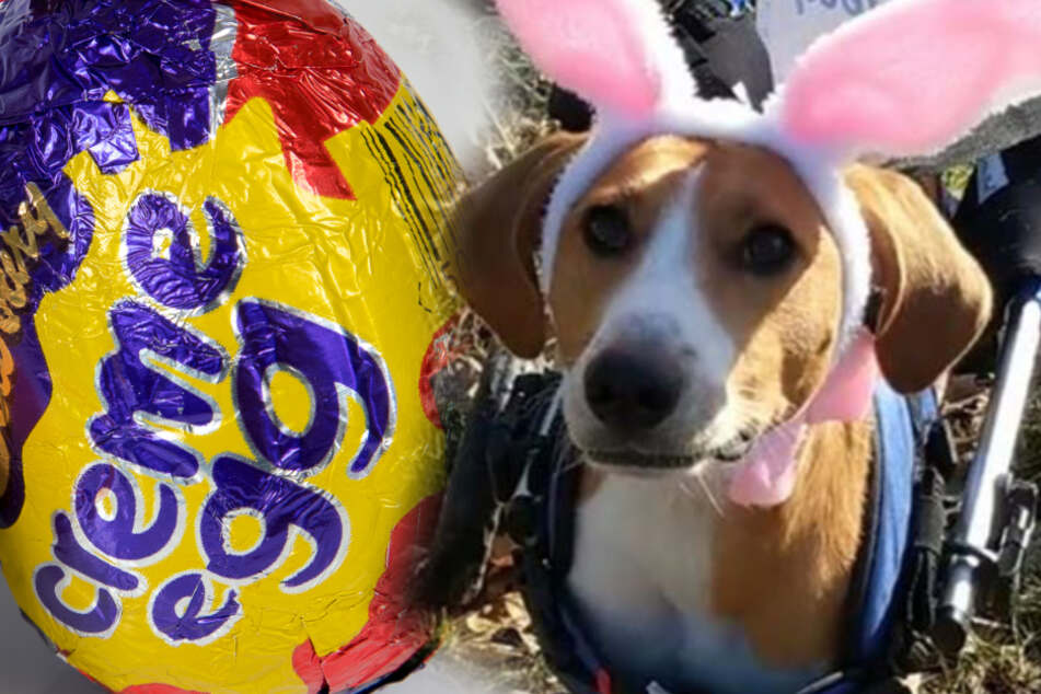 Zweibeiniger Hund will Osterhase werden, und Ihr könnt ihm dabei helfen!