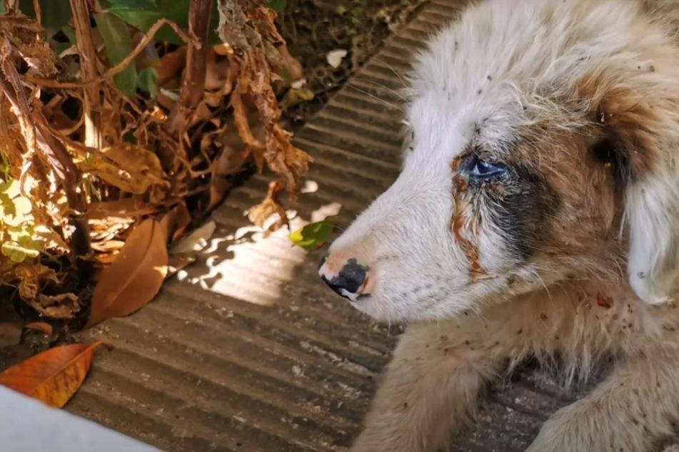 Ausgesetzter Hund kauert verzweifelt hinter Busch, doch keiner hilft