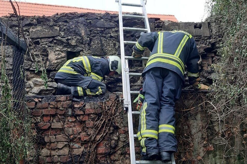 Nach einem Contanerbrand entdeckten Feuerwehrmänner die beiden verletzten Katzenbabys.