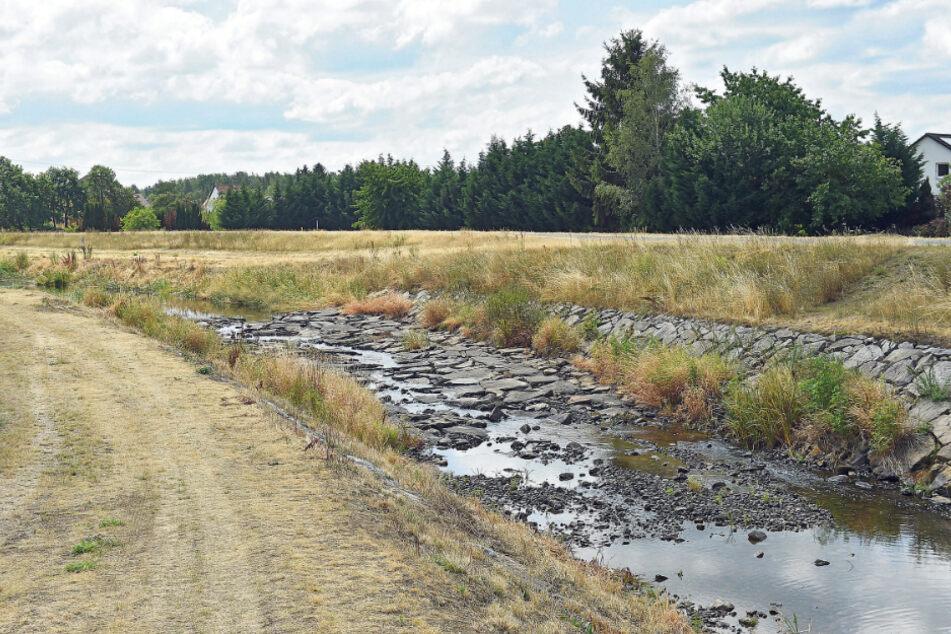 Die Schwarze Elster im vergangenen Sommer: Die heftige Dürre macht Sachsens Gewässern immer noch zu schaffen.