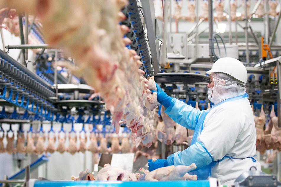 Geflügelfleisch wird in den Produktionshallen des Geflügelproduzenten Wiesenhof in Lohne (Niedersachsen) verarbeitet. (Archivbild)
