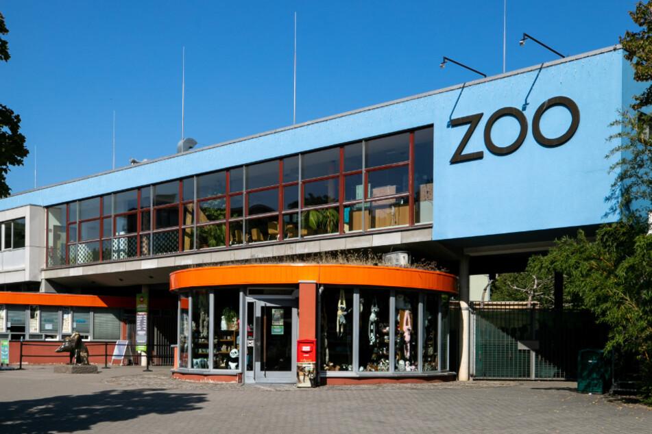 Noch in diesem Jahr wird der Elefantenbulle aus dem Dresdner Zoo ausziehen.