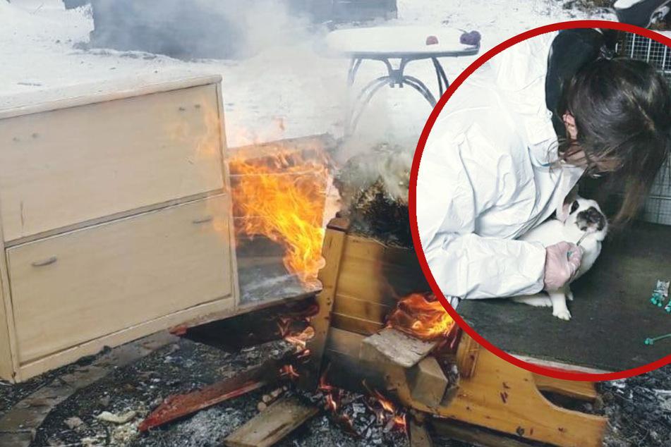 Tödlicher Virus-Ausbruch im Tierschutzverein! Kontaminiertes Gehege musste verbrannt werden