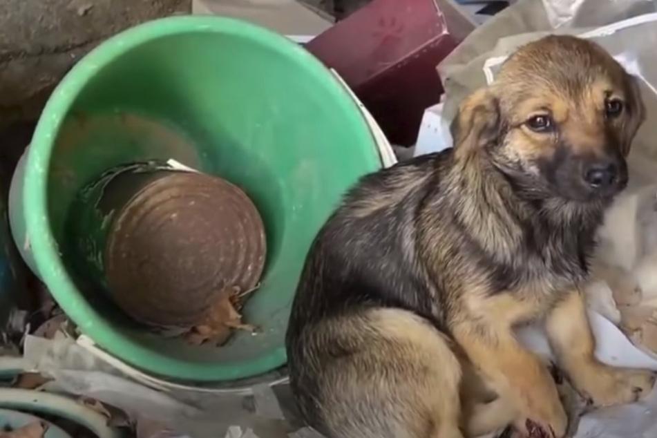 """""""Wo sind meine Geschwister?"""": Verletzter Hund zittert voller Angst, als man ihn findet"""