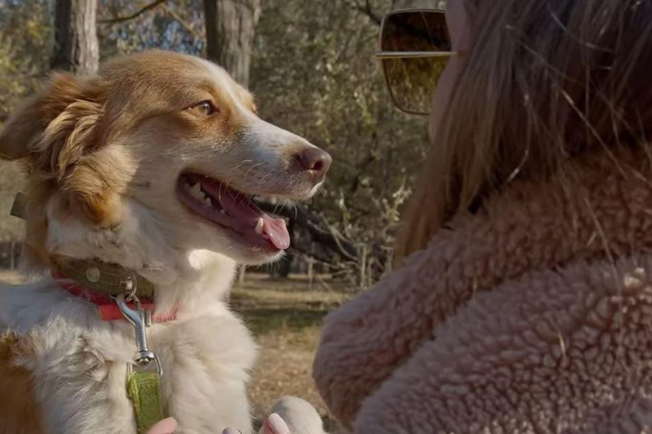 Die Hunde-Mama kann aufatmen: Ihre neuen Welpen wurden nicht getötet.