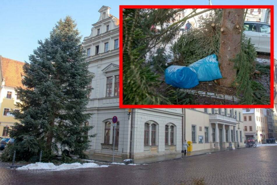 Rathaus sauer: Woher kommen die ganzen Weihnachtsbäume auf dem Markt?