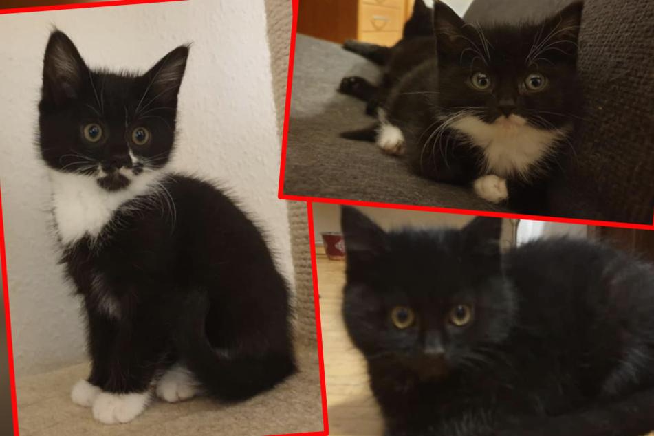 Sie kamen auf der Straße zur Welt: Schwarzes Kätzchen-Trio sucht Familie!