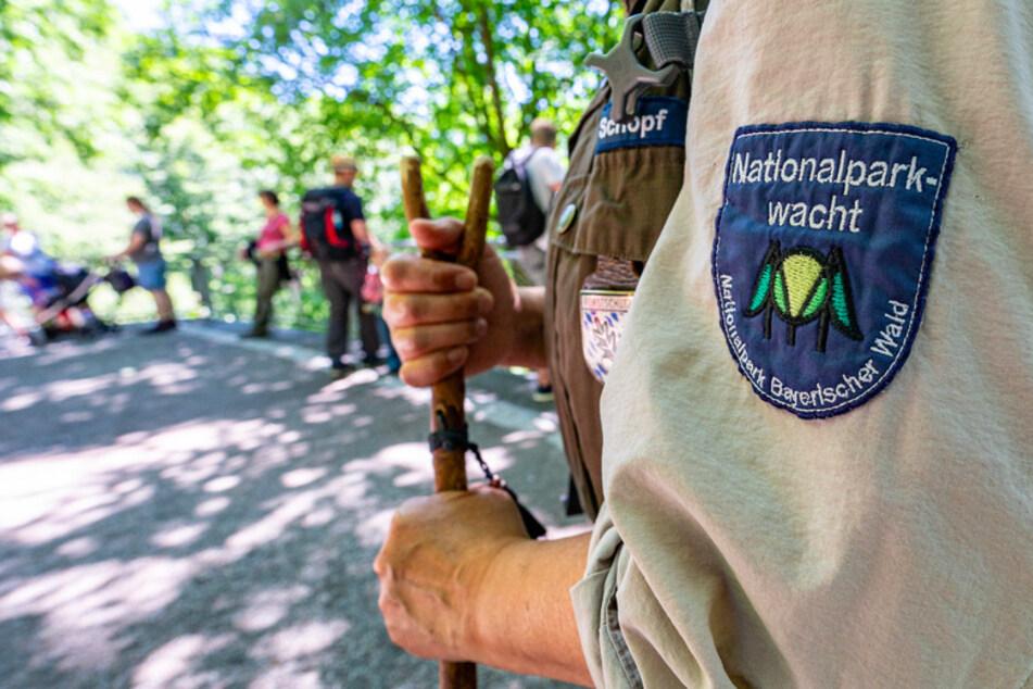 Die Corona-Krise beschert dem Nationalpark Bayerischer Wald einen enormen Andrang an Besuchern. (Symbolbild)