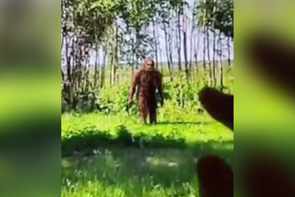 What do you think? Could this really be Bigfoot?