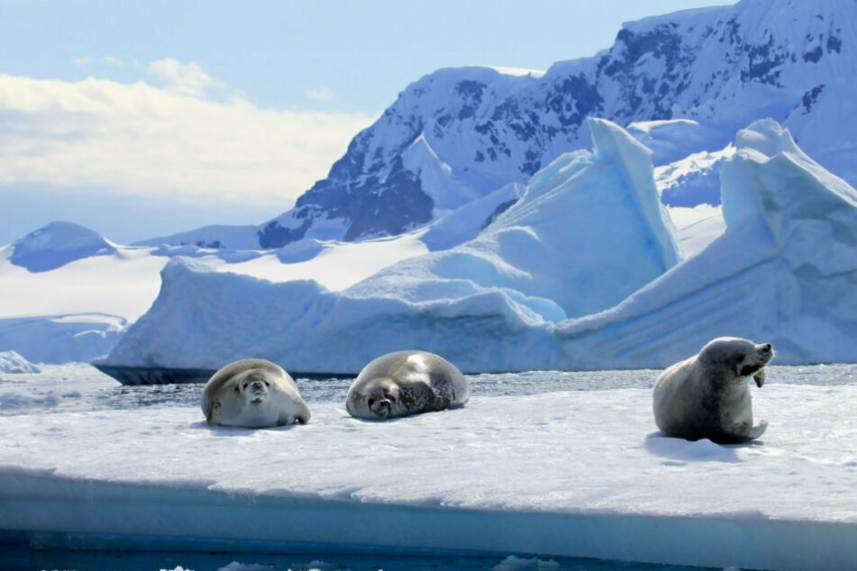 Ice (and seals) as far as the eye can see: only a few people want to live in the heart of Antarctica (stock image).