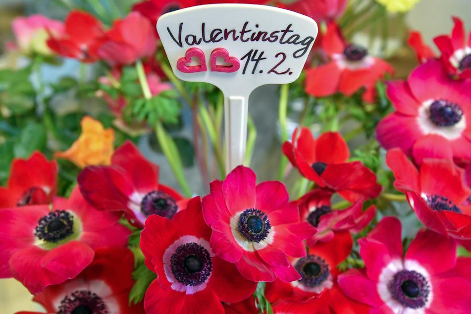 """In einem Blumengeschäft in Manschnow steckt ein Schild zum """"Valentinstag 14.2."""" in einem Blumenstrauß."""