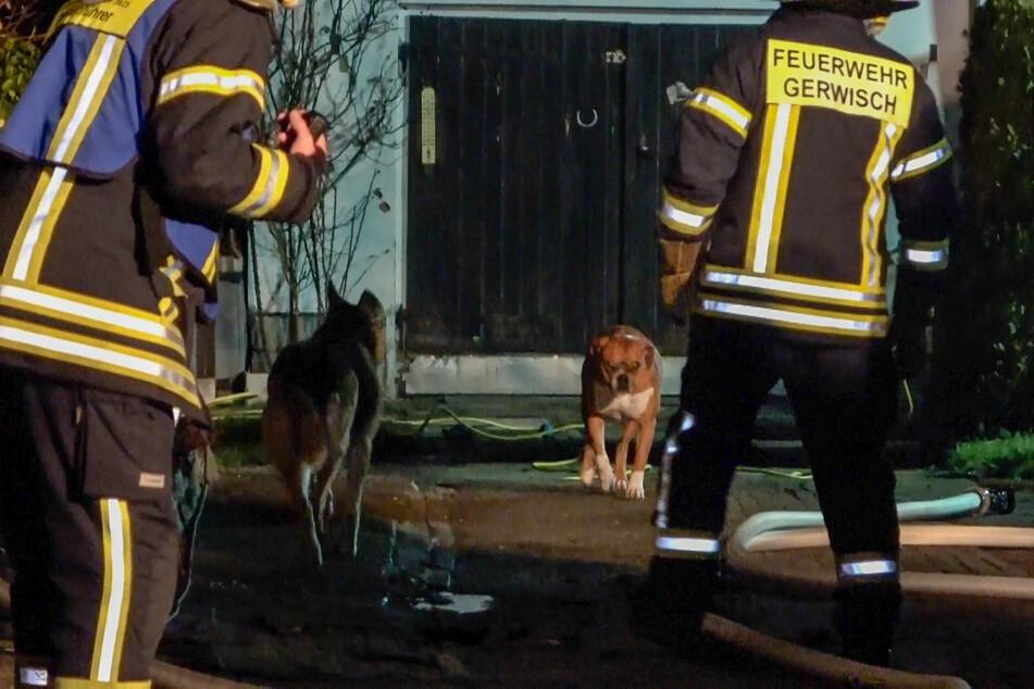 Aus dem brennenden Haus wurden mehrere Hunde gerettet.
