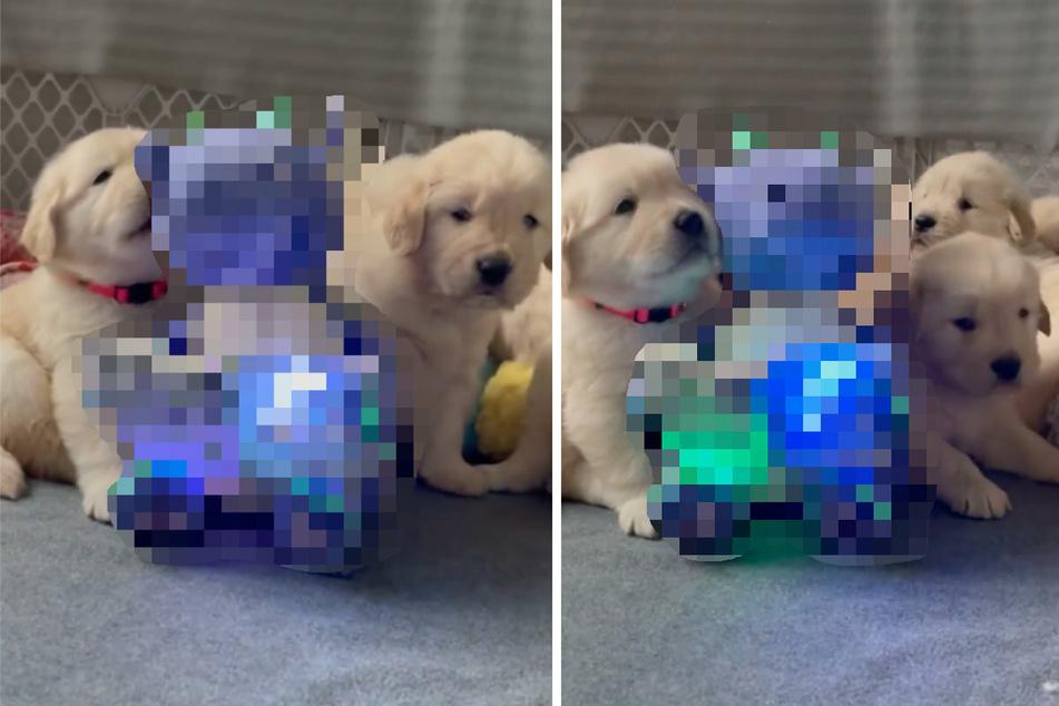 Hundewelpen ganz fasziniert: Welches Tier spricht denn da?