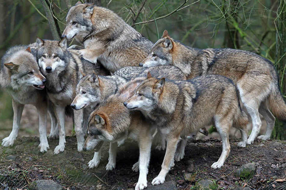 An den Ermittlungen nehmen auch Vertreter von Tierschutzorganisationen teil. (Symbolbild)