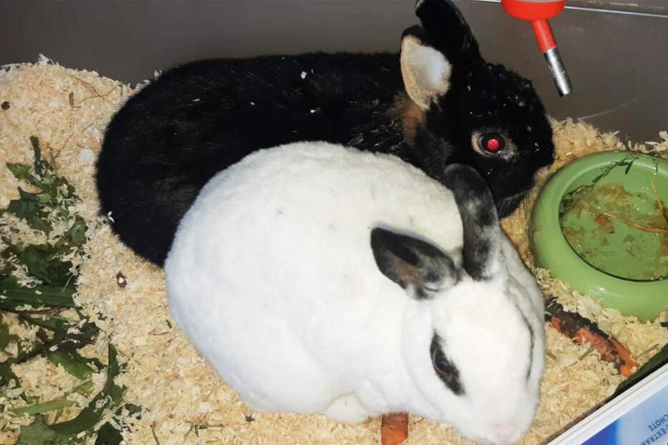 """Wie herzlos kann man sein? Kaninchen neben Müll """"entsorgt"""""""