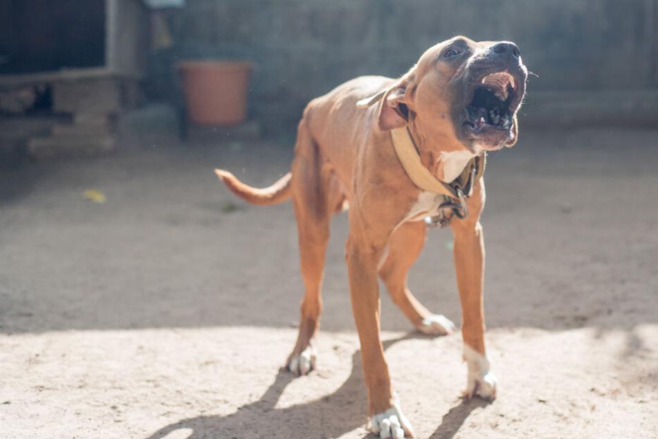 Eine Frau ist am Sonntag von einem Hund gebissen worden. (Symbolbild)