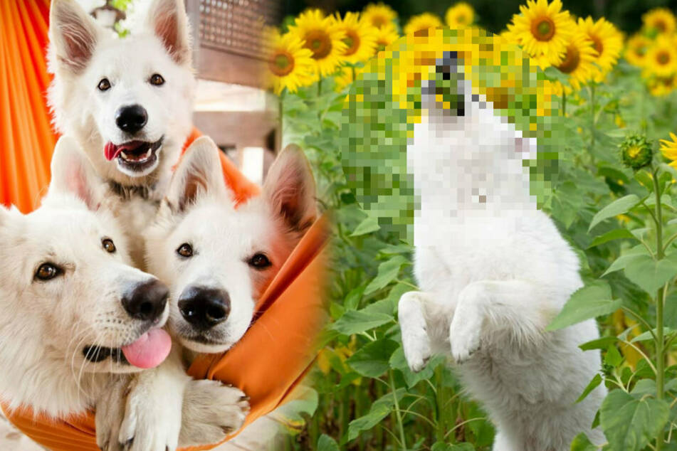 Dog owner wants to stage photo shoot with flowers, but it doesn't go as planned