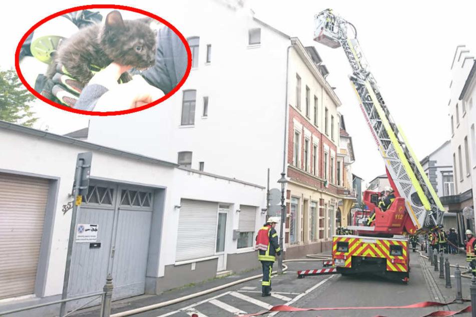 Feuerwehr rettet süßes Kätzchen aus brennender Wohnung