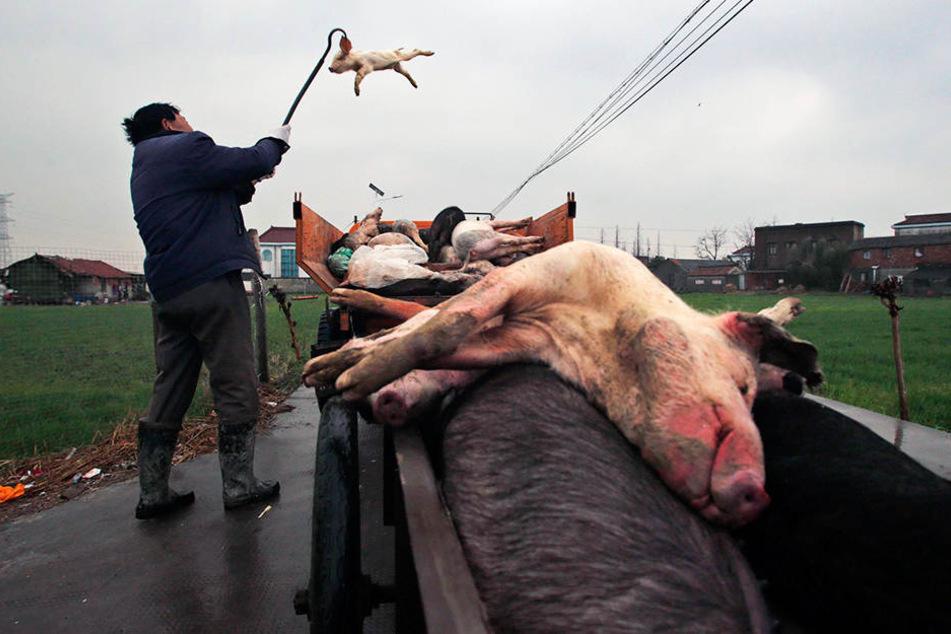 Die Schweineteile lagen auf dem Moschee-Gelände. (Symbolbild)