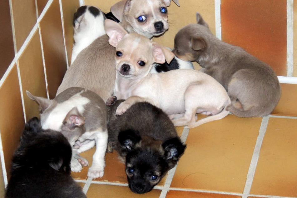 Die gefundenen Hunde- und Katzenbabys befanden sich in einem erbärmlichen Zustand.