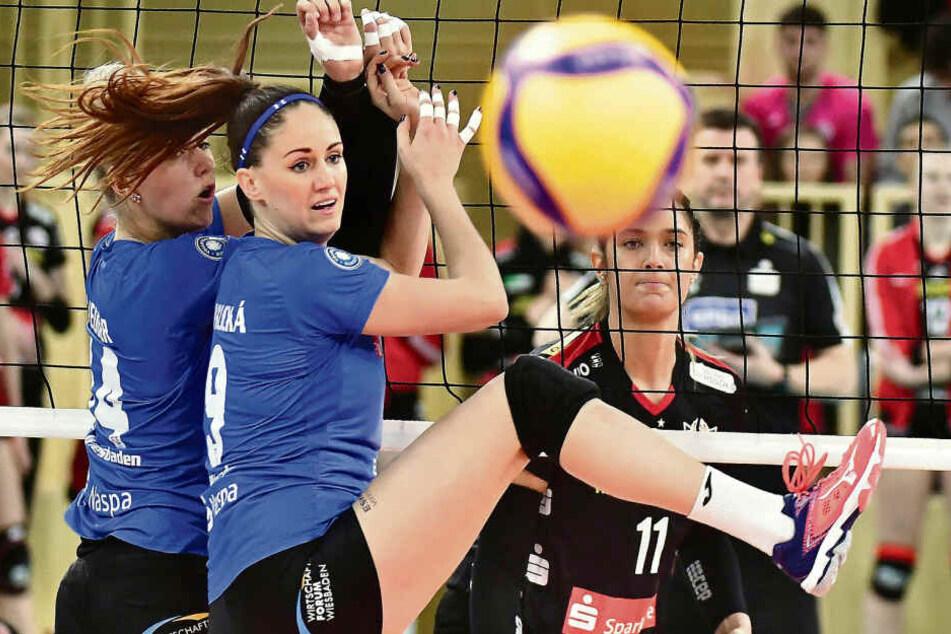 Die Partie in Wiesbaden war hart umkämpft. Hier schaut das VC-Duo Lena Vedder und Klara Vyklicka dem Ball hinterher. Hinter dem Netz beobachtet DSC-Topscorerin Milica Kubura die Szene.