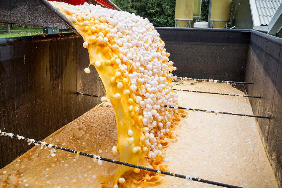 Die verseuchten Eier werden im Auftrag der niederländischen Lebensmittelkontrollbehörde NVWA zerstört.