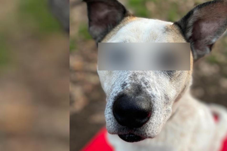 Kein Photoshop! Hund Fritz hat ziemlich außergewöhnliche Augen