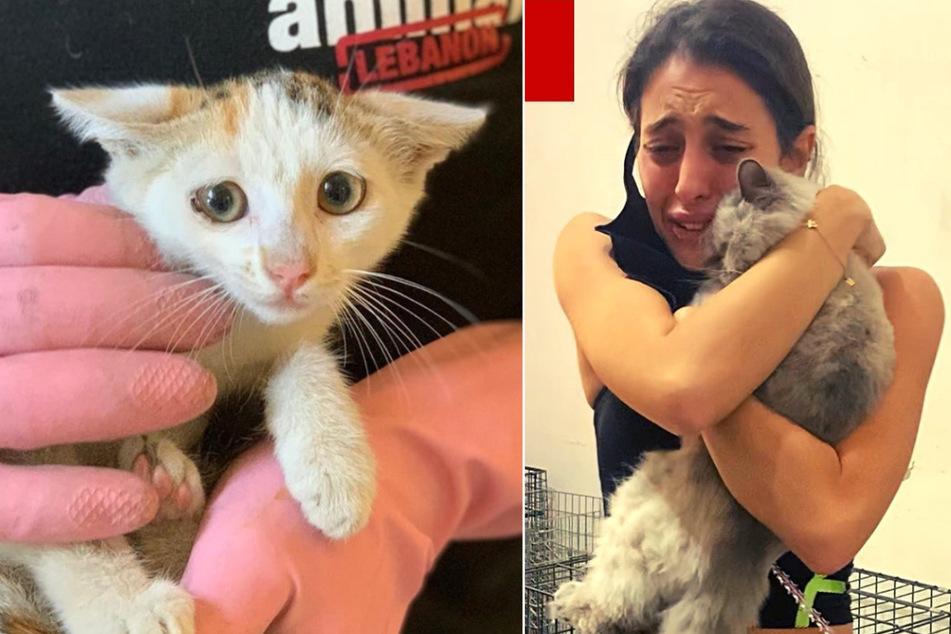 Nach Beirut-Explosion: Herzerwärmende Wiedervereinigung von Besitzern mit ihren Haustieren